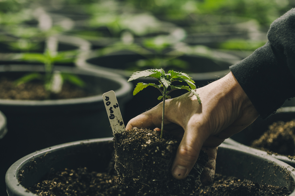 Member Blog: The Benefits of Different Types of Building Materials in a Cultivation Facility