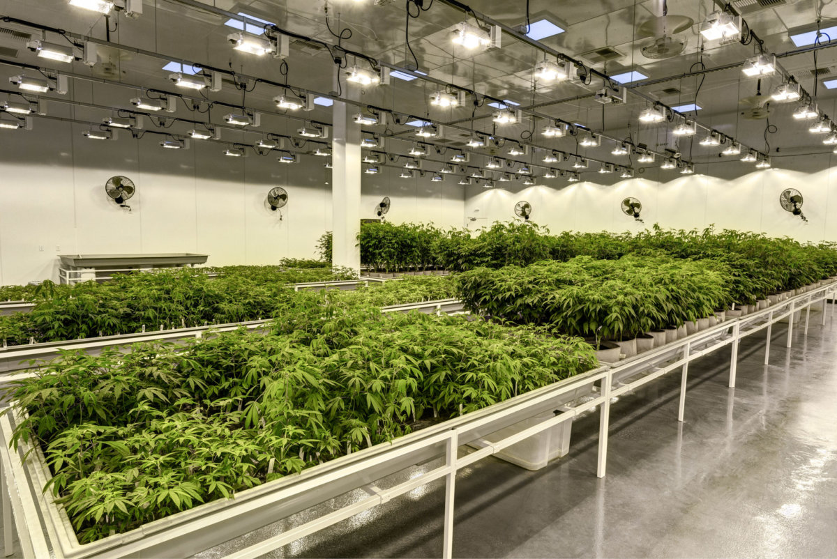 Member Blog: Weighing the Options for Cannabis Facility Construction