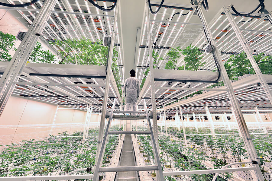 Pipp Horticulture Introduces New ELEVATE™ Platform System