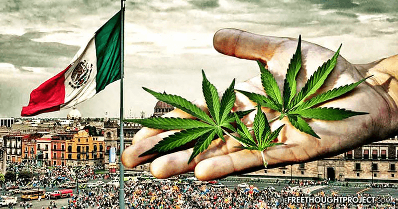 Member Blog: Cannabis Legalization in Mexico