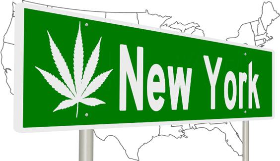 """""""Breaking Ground"""" Senator Sanders' Cannabis Workforce Initiative"""
